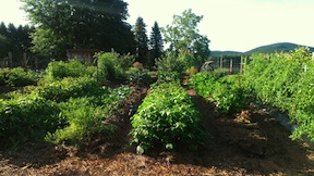 A garden revitalized in Montague, MA